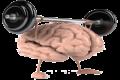 Fitter Brein